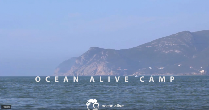 OCEAN ALIVE CAMP (screenshot from https://www.youtube.com/watch?v=t1A_83p-1_M)